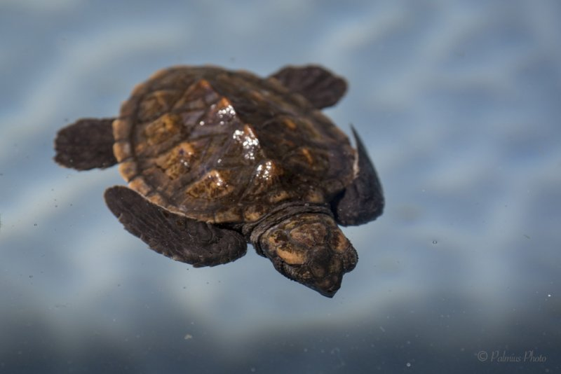 _O1A4329 (Old Hegg Turtle Sanctuary, Bequia)